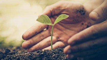 La conciencia ambientalimplica conocer qué es el ambiente, diferenciar uno sano de uno nocivo(iStock)
