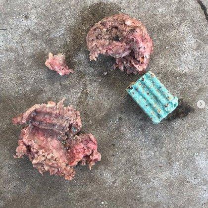 Esta sería la carne envenenada que habría ingerido el perro de la familia Bixler (Foto: IG/cedric_bixler_zavala_)