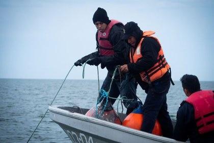 Los científicos evalúan el potencial del peligro del nuevo coronavirus. SEA SHEPHERD/ Vía Reuters.