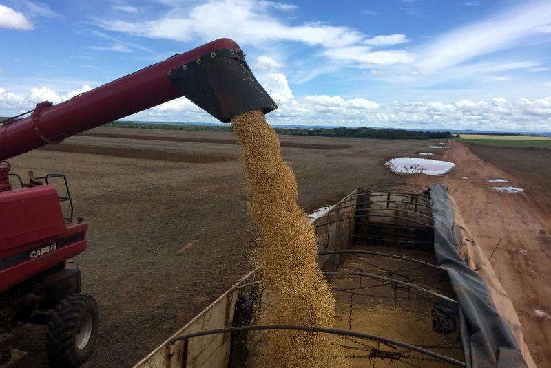 Fuertes bajas en los precios de la soja en Chicago (REUTERS/Roberto Samora)