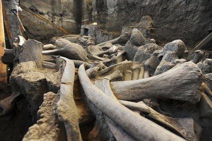 A una profundidad de dos metros y medio por debajo de la superficie de la calle La Saucera, en el municipio mexiquense de Tutepec, fue hallada una osamenta de mamut FOTO: INAH /CUARTOSCURO
