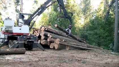 El ritmo de deforestación mundial crece y los árboles no son reemplazados