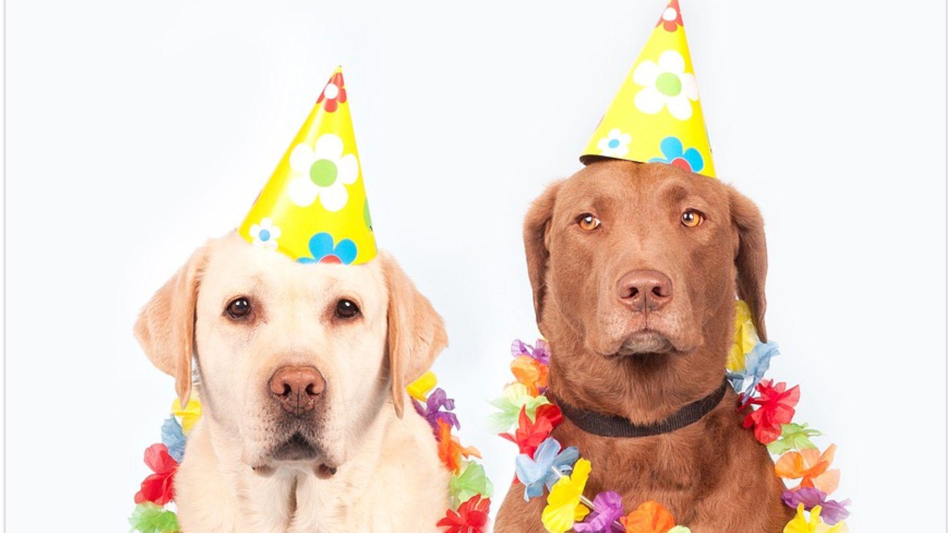 Este año el Día del Perro en México coincide con el Día Internacional del Perro, que se celebra el 21 de junio (Foto: Pixabay)