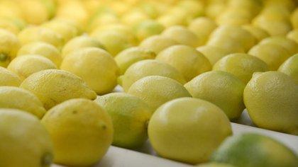 La Argentina es el mayor productor y exportador de limones
