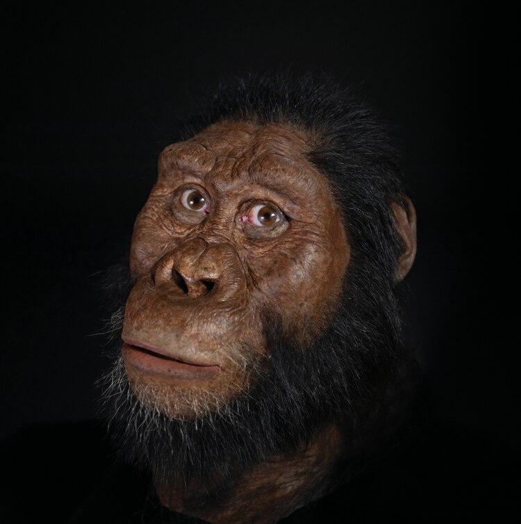 Reconstrucción facial del MRD. Matt Crow, cortesía del Museo Natural de Historia de Cleveland. La reconstrucción facial realizada por John Gurche fue posible gracias a la generosa contribución de Susan y George Klein