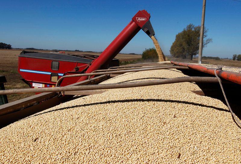 La comercialización de la actual campaña de soja es menor al año pasado, por una lenta cosecha (REUTERS/Enrique Marcarian)