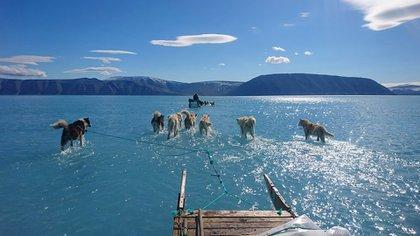Una imagen que recorrió el mundo el año pasado: perros tirando de un trineo sobre una capa de hielo derretida en Groenlandia (Steffen M Olsen/Twitter)