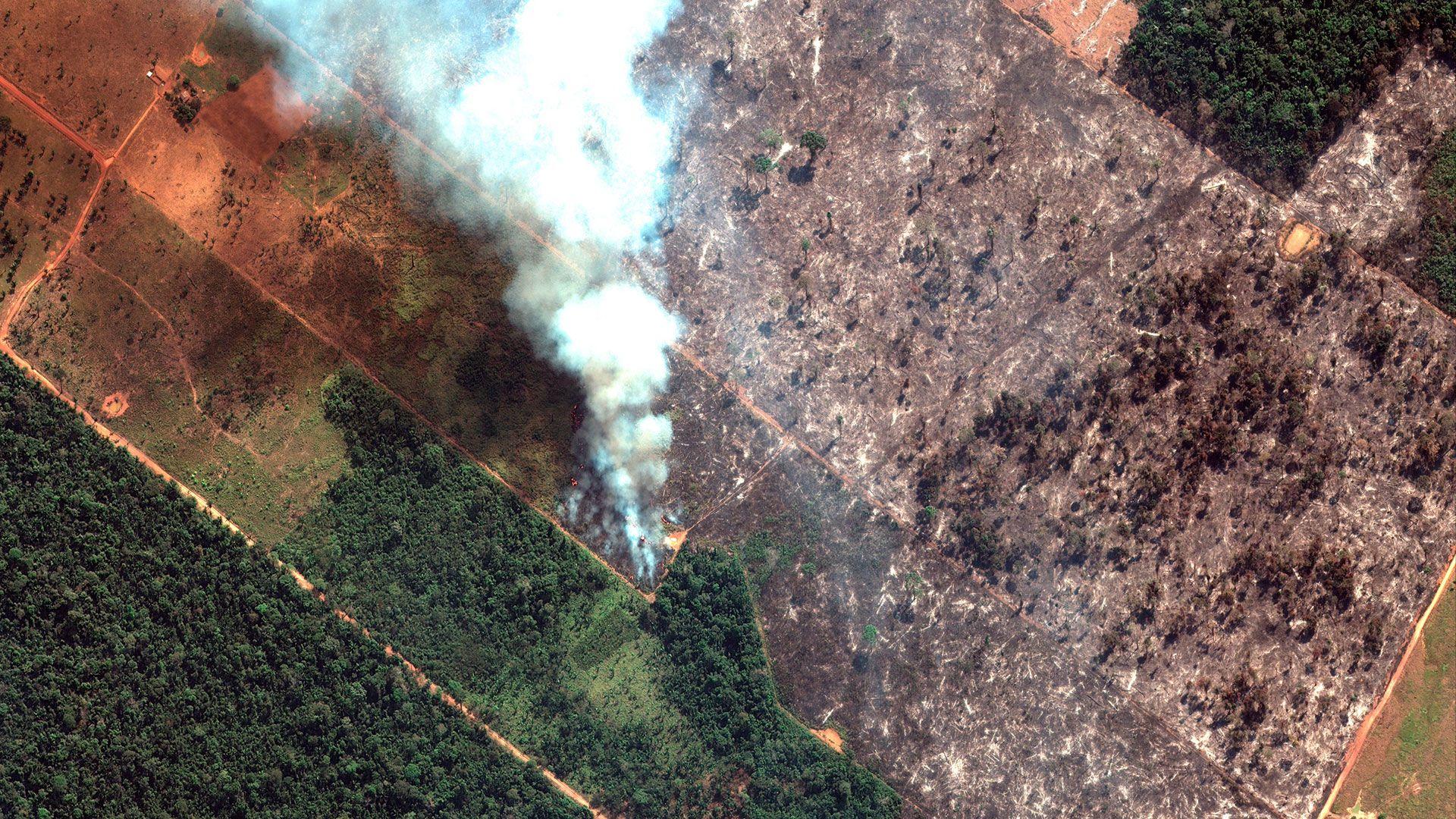 """La WWF estimó que la Amazonía """"pierde tres canchas de fútbol por minuto"""" por este incendio (AP)"""