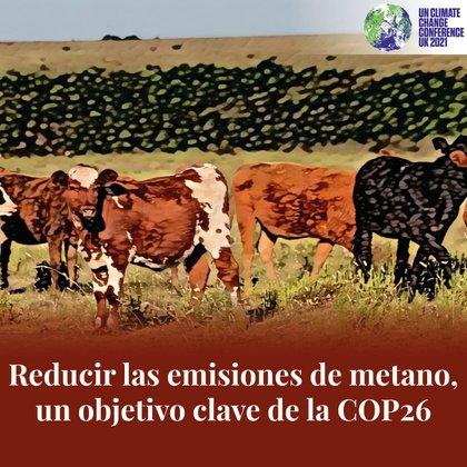 """Uruguay apunta a mejorar su producción de carne con el """"bienestar animal"""""""