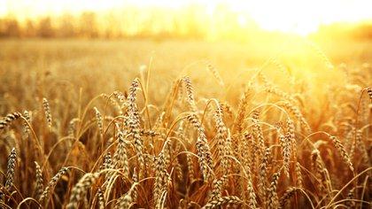 El inicio del año se caracteriza por las fuertes ventas de trigo.