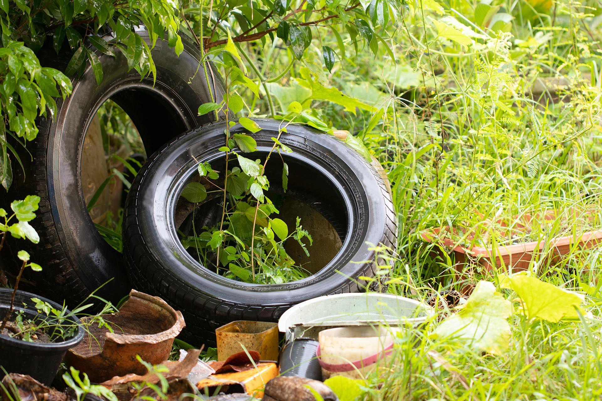 Se debe mantener los patios limpios y ordenados y los jardines desmalezados (Shutterstock)