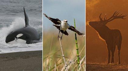 La fauna argentina invita a un recorrido con experiencias únicas (Crédito: archivo INPROTUR/ Ministerio de Turismo y Deportes de la Nación, Esteban Argerich y Secretaria de Turismo de La Pampa)