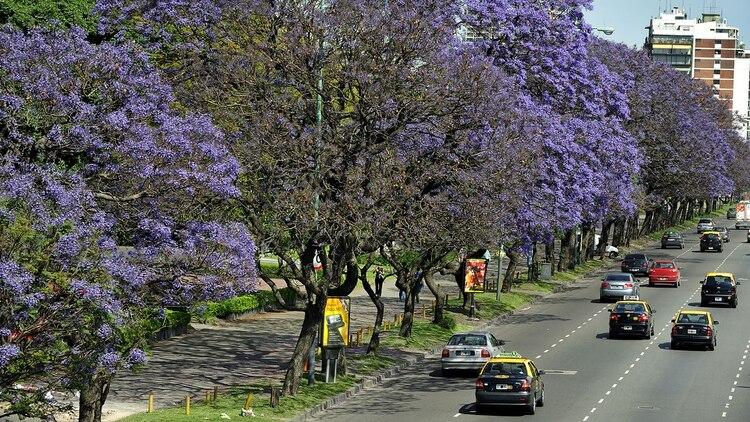 En la ciudad de Buenos Aires, donde hay plataformas de carsharing, el uso temporal de autos; el bicisharing, que está representado a través del sistema gratuito EcoBici (Shutterstock)