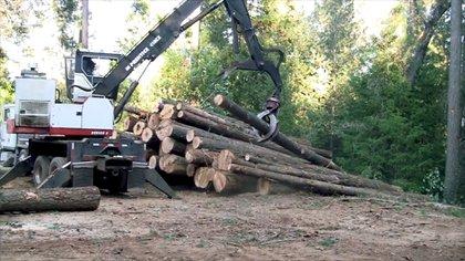 Los bosques siguen siendo un sostén fundamental de las economías campesinas e indígenas porque son los que las proveen de energía