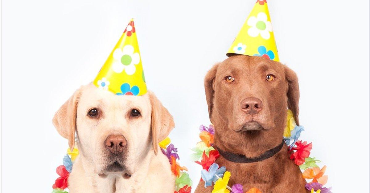 Los memes más divertidos por el Día del Perro  - Infobae