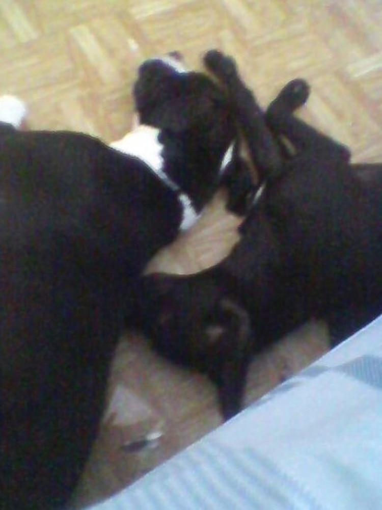 La mujer de 35 años subía imágenes de sus perros mascotas a redes sociales y realizaba publicaciones contra el maltrato animal Foto: (Facebook)