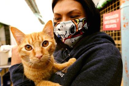 Una veterinaria juega con un gato acogido en la unidad de Cuidado Animal del Instituto Distrital de Protección y Bienestar Animal, este viernes, en Bogotá (Colombia). EFE/ Mauricio Dueñas Castañeda