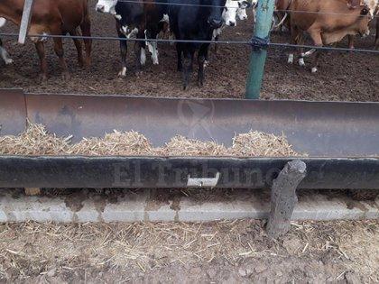 Varios caños fueron revendidos, algunos fueron utilizados como bebedero para vacas (Gentileza El Tribuno)