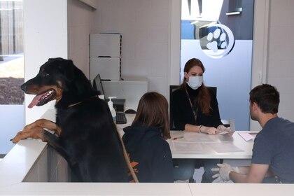 Si bien muchas mascotas (como Drake, adoptado en Bélgica por Sandra de Geradon y Cyprien De Boeck) encontraron un hogar durante la pandemia de COVID-19, otras perdieron sus rutinas. (REUTERS/Yves Herman)