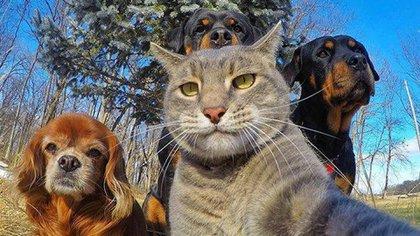 Las selfies de mascotas ya son furor en las redes sociales por su simpatía y originalidad
