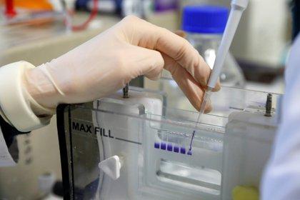 Hay alrededor de una docena de vacunas experimentales en ensayos clínicos de última etapa a nivel mundial, pero las que están probando Pfizer y Moderna son las únicas dos que dependen del ARN mensajero (REUTERS)