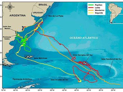 Mapa completo de ballenas monitoreadas en temporadas anteriores con el destaque de Papillon una ballena que transmitió desde que abandonó las aguas de Península hasta que regreso
