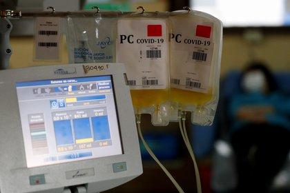 A través del procedimiento de aféresis se logra obtener plasma convaleciente -  REUTERS/Agustin Marcarian