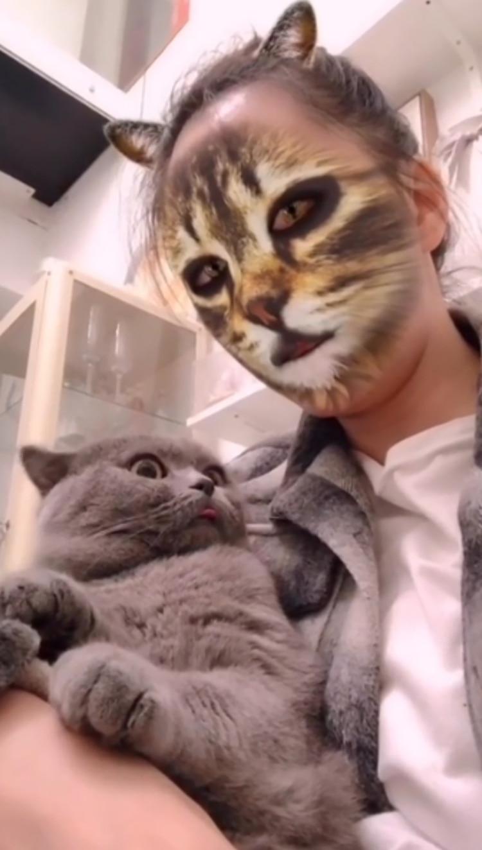Mascotas se hacen virales a través de sus reacciones en Tik Tok (Foto: Especial)