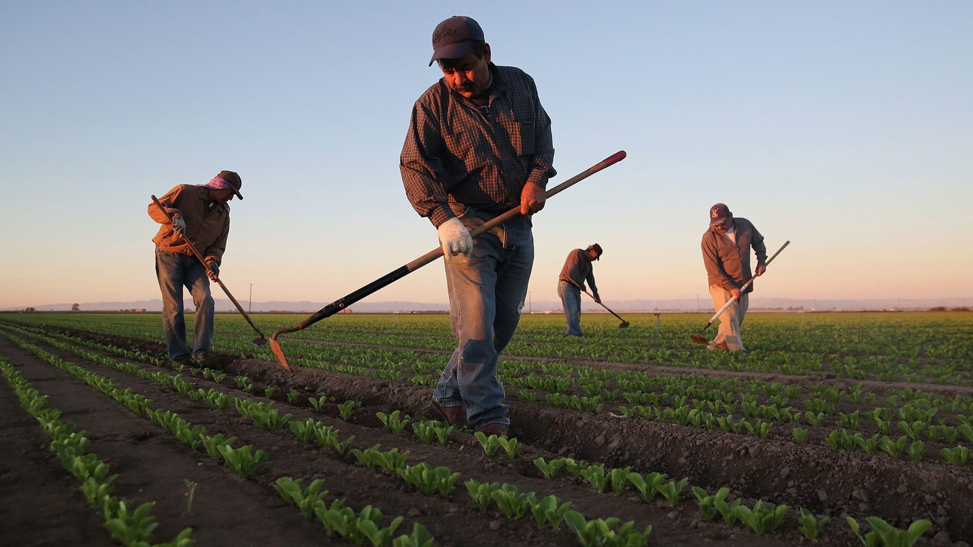 """El programa """"Sembrando Vidas"""" apoya a 400,000 productores del campo en diecinueve estados, entre ellos: Chihuahua, Tamaulipas, Tlaxcala, Veracruz, Durango, San Luis Potosí, Tlaxcala y Yucatán (Foto: Getty)"""