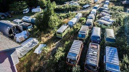 Apareció un lote de cincuenta y cinco Volkswagen Kombi, un modelo nacido en 1950