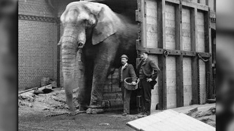 """""""Jumbo se negó a entrar al corral de madera y hasta rompió las cadenas. Solo entró cuando los dueños del circo aceptaron que su cuidador Scott viaje con él"""".(Foto: Wiki Commons)"""