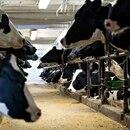 Foto de archivo de vacas de ordeño en una granja en Wisconsin, Estados Unidos (Daniel Acker/Bloomberg)