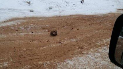 Los restos fueron enterrados en arena que se extendió sobre una carretera para mejorar la tracción sobre hielo negro. Fotografía: Ministerio del Interior de Rusia