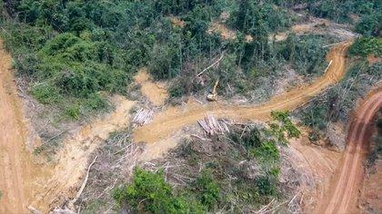 Muchas veces las empresas talan una gran superficie y dejan unos 30 árboles para escudarse en que no talaron todo el bosque. Esos árboles luego no sobreviven