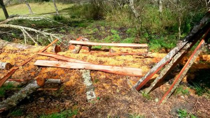 Tala ilegal de árboles Alisos en Sumapaz, Cundinamarca. Foto: CAR Cundinamarca