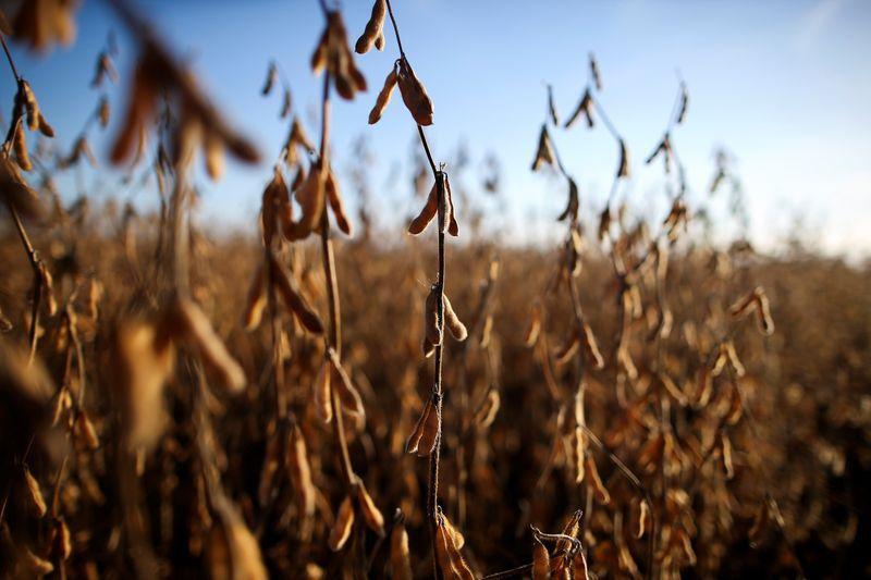Bajar por tres meses las retenciones a la soja, una de las medidas en análisis