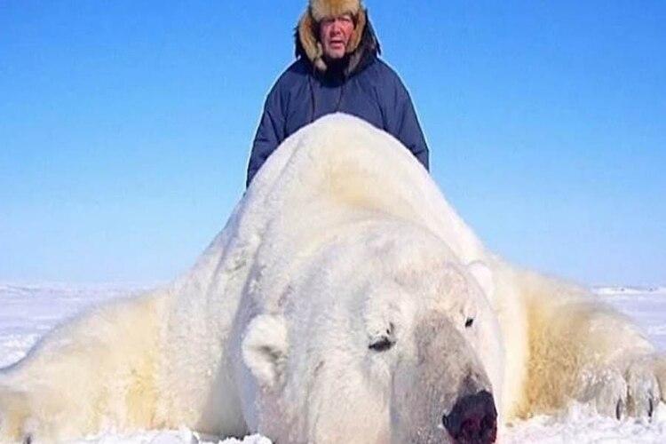 La caza de animales se realiza en el polo ártico (Foto: Especial)