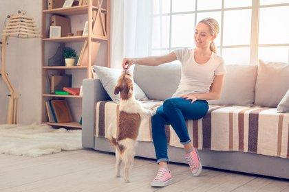 Aprovechar el tiempo en casa para  desarrollar nuevas formas de juego, ejercicio o incluso enseñarle nuevos trucos (Shutterstock)