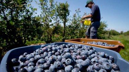 Una encuesta del Movimiento CREA reflejó la situación de los productores de la Región Cuyo, entre ellos los que se dedican a la vitivinicultura