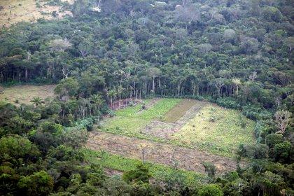 Vista de un área deforestada en zona rural de Nueva Colombia (Colombia). EFE/Mauricio Dueñas Castañeda/Archivo