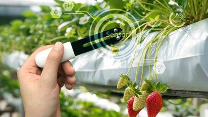 Cada vez hay más avances en nuevas tecnologías para la producción de alimentos
