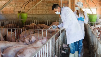 La carne vacuna, de aves y porcina esta casi siempre inyectada de antibióticos (iStock)