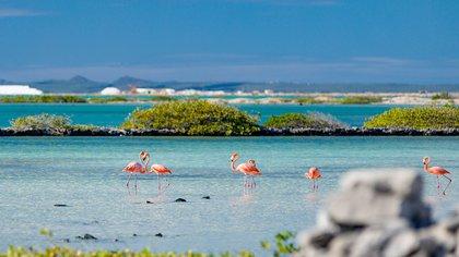 Una de las características más llamativas de Bonaire es Pekelmeer Flamingo Sanctuary, ubicado en las salinas del sur de la isla y hogar de más de diez mil flamencos. Si bien el santuario en sí está fuera del alcance de los viajeros, aún puede disfrutar de la observación de aves desde la cercana Pink Beach. Si bien los flamencos pueden ser un atractivo, la isla alberga más de 22 playas, formaciones de cuevas marinas y más que la convierten en un paraíso para los amantes de la naturaleza y la playa