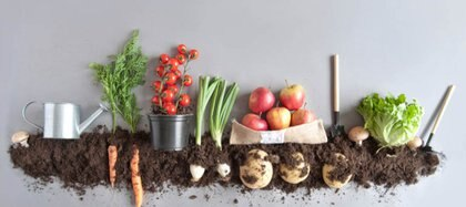 cómo hacer compost en casa (Shutterstock)