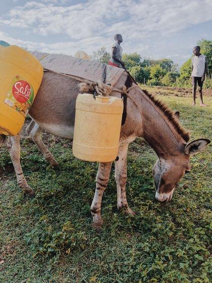 Van a buscar agua en burro al lago Victoria.