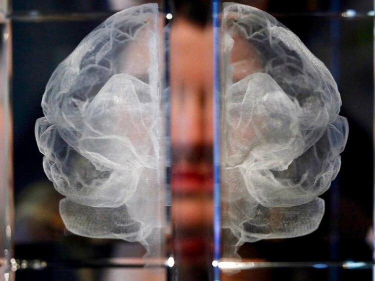 Los investigadores pueden estudiar las primeras etapas de la enfermedad mucho antes de que aparezcan los síntomas cognitivos