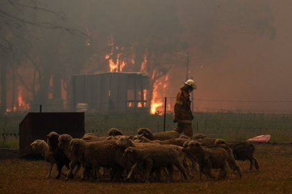 Los equipos del Servicio de Bomberos Rurales (RFS) se dedican a la protección de la propiedad de varias casas a lo largo de la carretera Old Hume Highway, cerca de la ciudad de Tahmoor, ya que el incendio de Green Wattle Creek amenaza a varias comunidades en el suroeste de Sídney, Australia (Reuters)
