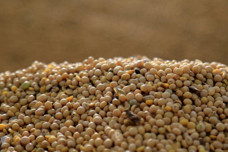 El precio de la soja cayó en las últimas semanas en el mercado de referencia de Chicago, en medio de la siembra en nuestro país (Reuters)