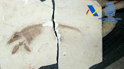La DGA inició los trámites formales para el retorno de fósiles y piezas paleontológicas al país. Foto: Prensa Dirección General de Aduanas/Télam/CBRI