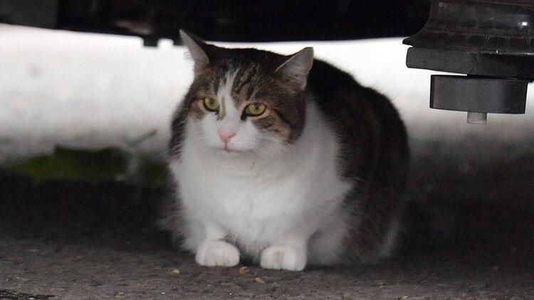 "Larry el Gato se refugia de la lluvia debajo de ""La Bestia"" (Reuters)"